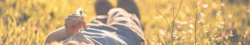 dandelion1500x270