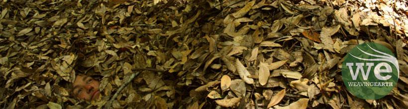 leaf hiding style=